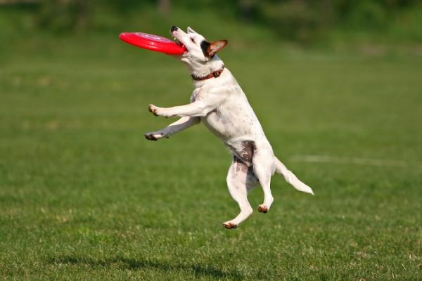 Frisbee Toys For Dogs